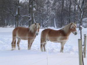 Winterferien für die ganze Familie in den Schlössern des Hirschberger Tals